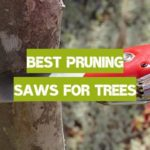 Best Pruning Saws for Trees